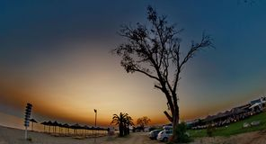 Route des arbres Photo libre de droits