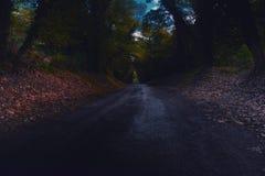 Route des bois Photographie stock libre de droits