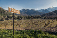 Route des vins road sign by Vineyard in Corsica. Route des vins road sign by rows of carefully pruned vines in a Corsican vineyard bathed in late afternoon light Royalty Free Stock Photography