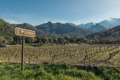 Route des vins road sign by Vineyard in Corsica Stock Photo