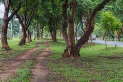 Route droite sous les arbres images stock