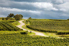Route du vin in Alsace france royalty free stock image