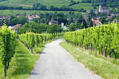 Route du wine, in de Elzas. Frankrijk. Royalty-vrije Stock Foto's