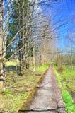 Route en été Image libre de droits