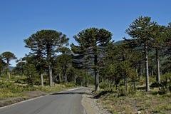 Route en Argentine Images libres de droits