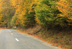Route en automne Photo stock