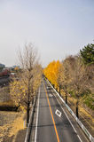 Route en automne, Osaka Japan (1) Images stock