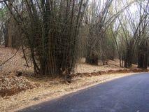 Route en bambou Photo stock