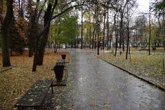 Route en blanc de parc d'automne Photo stock