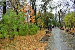 Route en blanc de parc d'automne Photographie stock