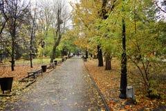 Route en blanc de parc d'automne Photographie stock libre de droits