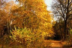 Route en bois. Images libres de droits