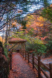 Route en bois avec les feuilles rouges Photographie stock