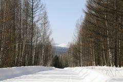 Route en bois de l'hiver aux collines des montagnes de Sayan Image stock