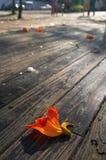 Route en bois de planche Photo stock