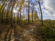 Route en bois tandis que ressort à la transition d'automne avec de beaux tons oranges et rouges images stock