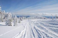 Route en forêt de l'hiver Photo libre de droits