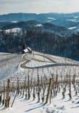 Route en forme de coeur célèbre de vin en Slovénie en hiver, Photographie stock libre de droits
