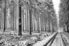 Route en hiver de forêt Photos libres de droits