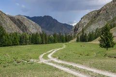 Route en montagnes au fond pluvieux nuageux de ciel avec le troupeau de frôler des vaches Photos libres de droits