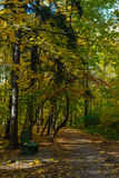 Route en parc Photos libres de droits