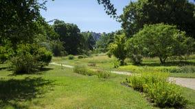 Route en parc image libre de droits