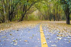 Route en parc d'automne photo stock