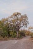 Route en parc de Kruger Photo stock
