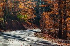 Route en parc de Lullwater, Atlanta, Etats-Unis Photographie stock libre de droits