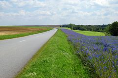 Route en Picardie Photo stock