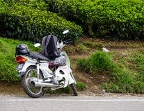 Route entre la plantation de thé en Malaisie Photographie stock libre de droits