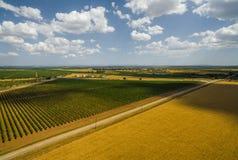 Route entre le champ de blé et le vignoble Photos libres de droits