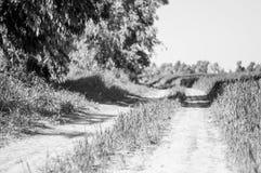 Route entre le champ et la forêt Photos libres de droits