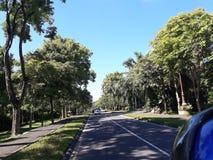 Route entre les arbres photo libre de droits