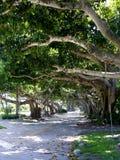 Route entre les arbres Photo stock