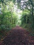 Route entre les buissons Photographie stock libre de droits