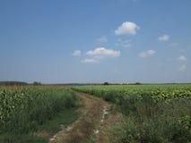 Route entre les champs images libres de droits