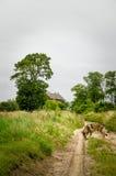 Route entre les champs Images stock