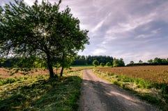 Route entre les champs de trèfle Photographie stock libre de droits