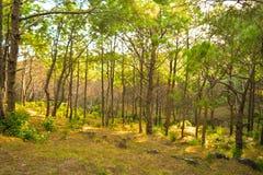 Route entre les collines de pin photo stock