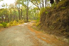 Route entre les collines de pin images stock