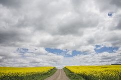Route entre les gisements de graine de colza sous les nuages photos libres de droits