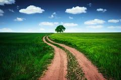 Route et arbre isolé dans un domaine de blé contre le ciel bleu avec le petit morceau Image stock
