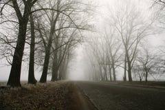 Route et arbres brumeux de croisement de forêt Paysage mystérieux de début de la matinée de fond, gel au sol film de bruit image stock