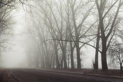 Route et arbres brumeux Fond mystérieux de forêt Paysage de début de la matinée, gel au sol effet de film de bruit image stock