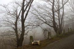 Route et arbres brumeux Paysage de début de la matinée, Allemagne Photo stock