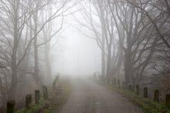 Route et arbres brumeux Paysage de début de la matinée, Allemagne Image stock
