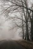 Route et arbres forestiers brumeux Paysage de début de la matinée, gel au sol effet de film de bruit vertical photographie stock libre de droits