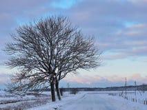 Route et beaux arbres d'hiver, Lithuanie Photo stock