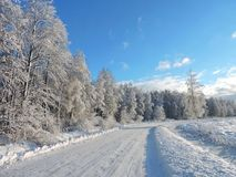 Route et beaux arbres d'hiver, Lithuanie Image libre de droits